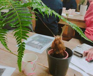 観葉植物と家具